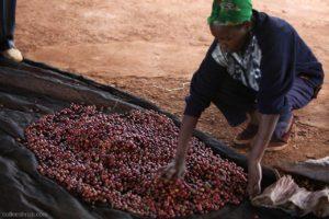 Kenya-Tegu-coffee-mill-300x200