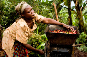 fair-trade-coffee-uganda