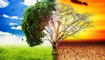 climate-change-trees-copertina-360x240