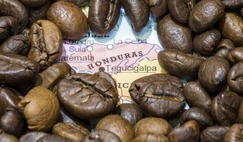 Honduras Coffee Production