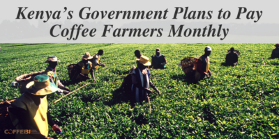 Kenya's Government Plans to Pay Coffee Farmers Monthly
