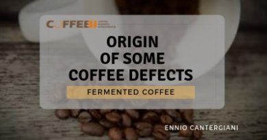 Fermented coffee