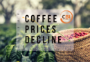 Coffee Prices Decline, Why It Happened And How To Stop It