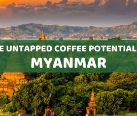 The untapped coffee potential in Myanmar